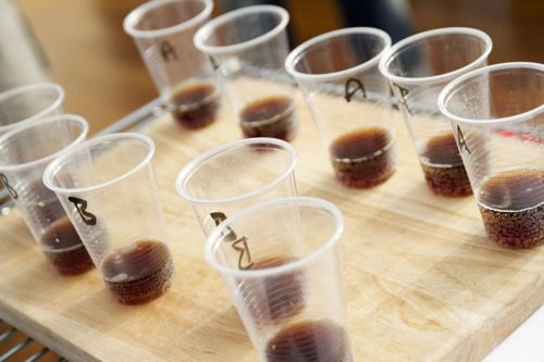 comparing coffee for taste test experiments